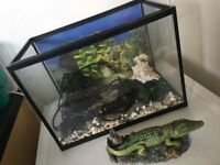 Small beginners fish tank (full set)