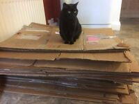 x 20 Cardboard boxes for sale - various sizes