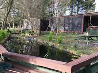 Large pond available for rehoming of unwanted fish,