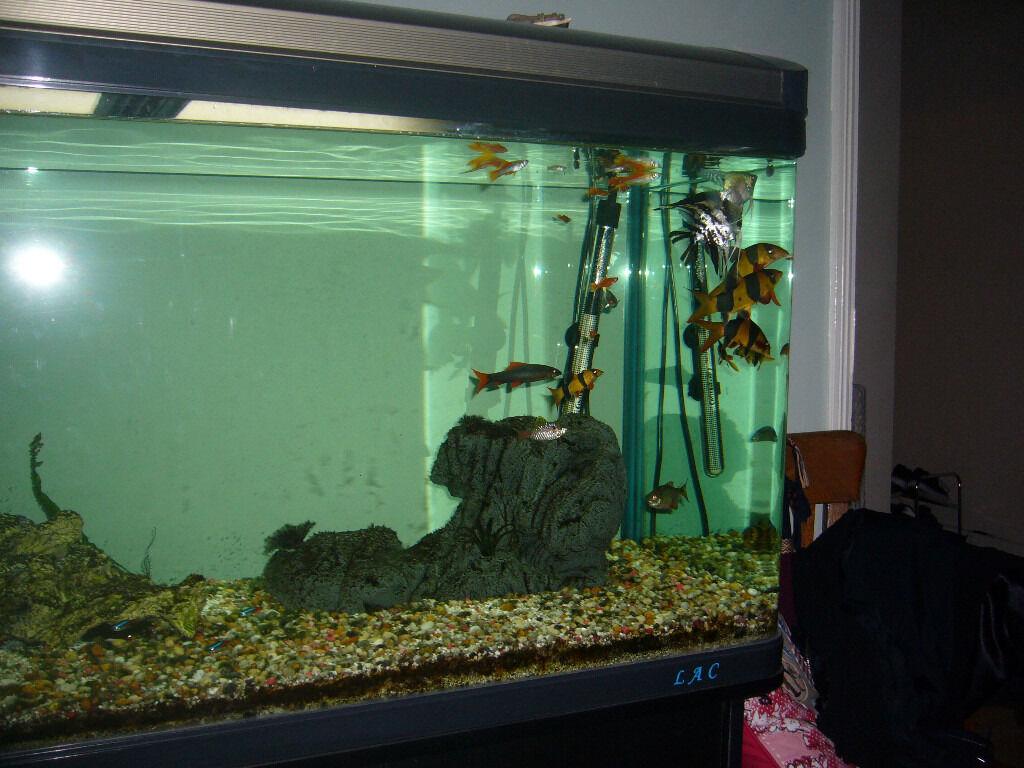 Aquarium fish tank for sale in london - Lac Fish Tank