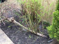 Looking for gardening help