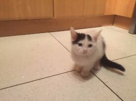 A fluffy and cuddly kitten is looking for a new home