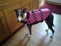 Dog floatation jacket