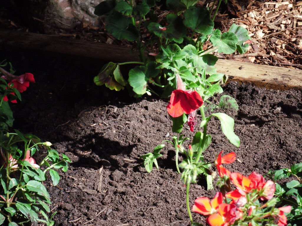 Screened topsoil / compost / soil improver