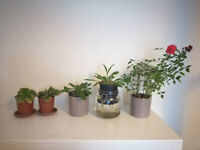 roses and small plants