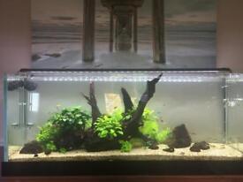 Tropical aquarium full set up