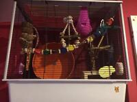 Rat cage and accessories