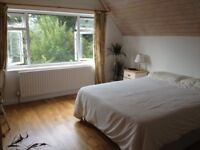 Large Bedroom in shared house