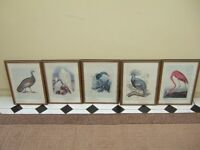 Set of Five Exotic Bird prints.