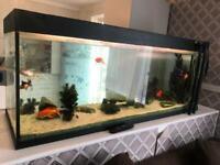 Full set up aquarium