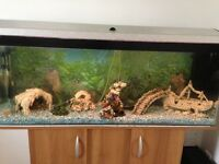 4ft fish tank all accessories