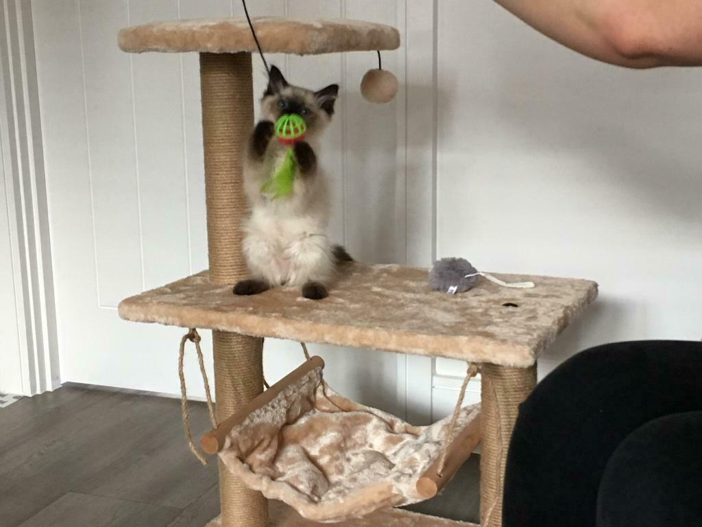 Pets At Home Hudson Cat Hammock In Chesterfield Derbyshire Gumtree