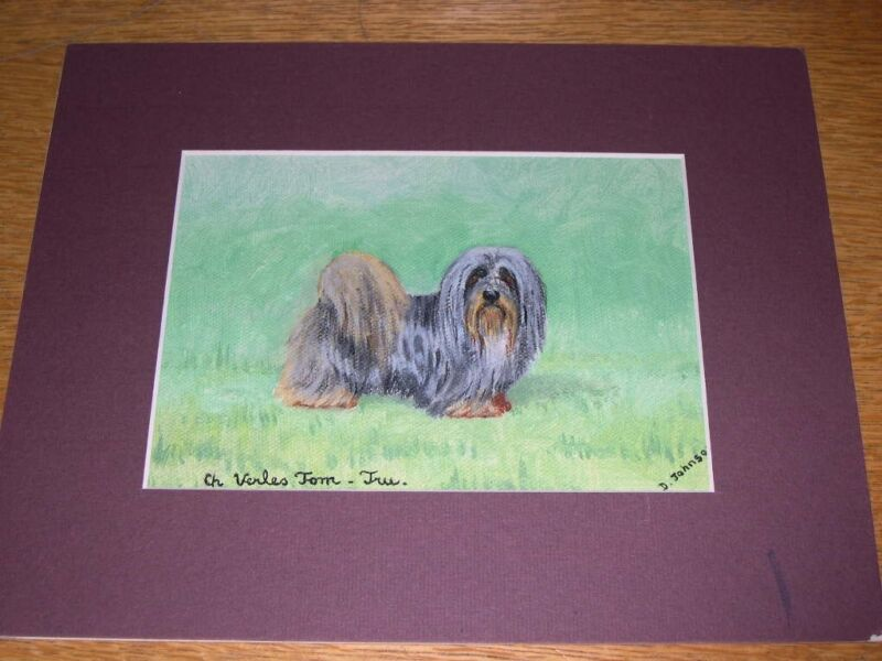 """ANTIQUE LHASA APSO DOG OIL PAINTING BY D. JOHNSON """"CH. VERLES TOM-TUE"""""""