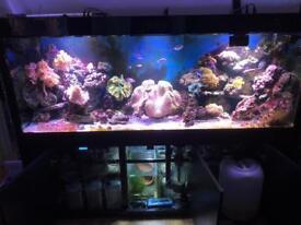 Cleairs aquatics maz 2000