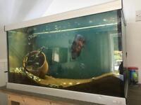 Large tank setup with fish