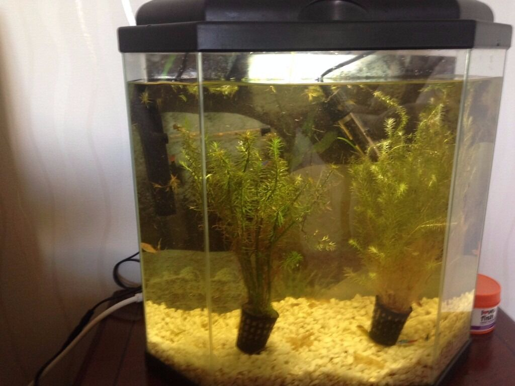 25 litre fish tank.with accessories for tropical set up.