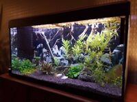 Fish tank FLUVAL ROMA 200
