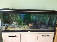 Fish Tank with fish & accessories