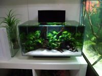 Modern Stylish 25L Aquarium Tropical Fish Tank