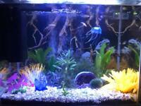 Fish tank and various fish