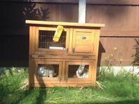 2 rabbits free hutch free hay