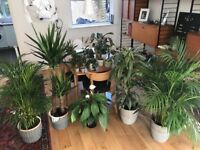 Large collection of house plants and cactus