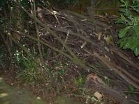 FREE FREE. Fire wood suitable for log burner, Tree cuttings (branches)