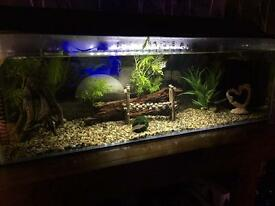 Fish tank and fish for Sale (86 litres - all equipment and fish included)