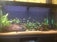 Juwel rio 300 aquarium