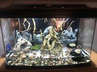 BARGAIN 120 L aquarium