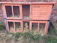 Guinea Pigs with large hutch and full set up
