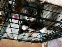 STILL AVAILABLE this awesome kitten is looking for his 4ever home, pls read more NEW PICS ADDED