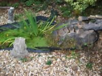 Garden Pond with water feature