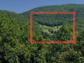 Land and virgin forest to sale!