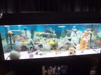 Fish tank. 5ft. 550 litres