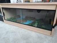 Two geckos and vivarium, full setup.