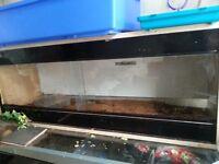 4ft long vivarium for sale
