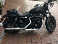 Harley Davidson 883 xl iron for sale