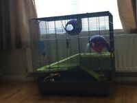 Rat Cage.. Big enough to fit 6 rats or 1 ferret