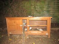 Ferrets for sale including Hutch
