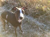 Dog Walking/Pet Services Wincobank Pets (Meadowhall)