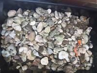 Free decorative garden stones (used)- collection only