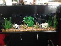 4ft Fishtank for sale