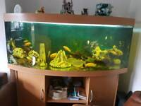 5ft 450 liter JUWEL vision bow fronted fish tank and Stand For Sale full set up