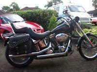 2008 Harley Davidson Softail Custom 1584cc