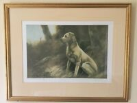 John Trickett Golden Labrador limited edition signed print