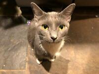 Loving and friendly female cat