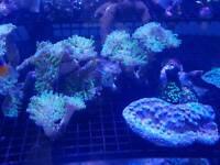 Corls. Live rocks. Dry rocks for marine aquarium