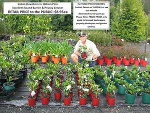 Superb Landscaping Plants - Must See! - Priced From $8.95 HS106 Tallai Gold Coast City Preview