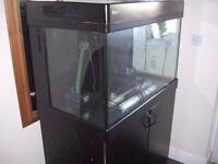 fish tank / marine / redsea max 250